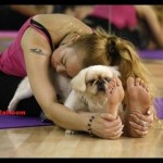 The Benefits of Dog Yoga Or Doga: An Exercise For Your Pet Dog